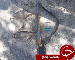 شکارچی کبک در ارتفاعات اشترانکوه دستگیر شد