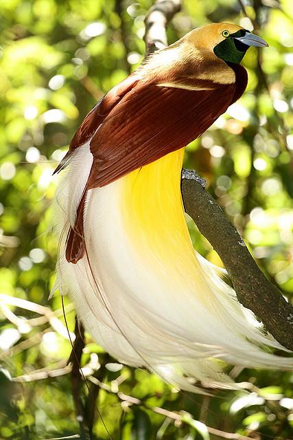 باشگاه خبرنگاران -۱۰ گونه از زیباترین پرندگان جهان +تصاویر