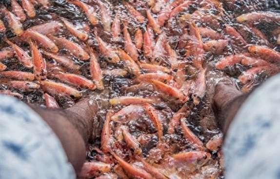 معالجه در استخر پر از ماهی؛ آری یا خیر؟ + تصاویر