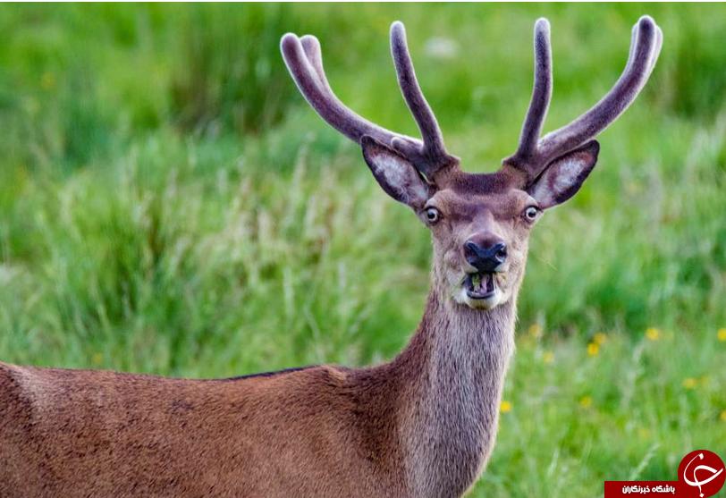 خندهدارترین تصاویری که از حیوانات در سال 2018 منتشر شد+ تصاویر