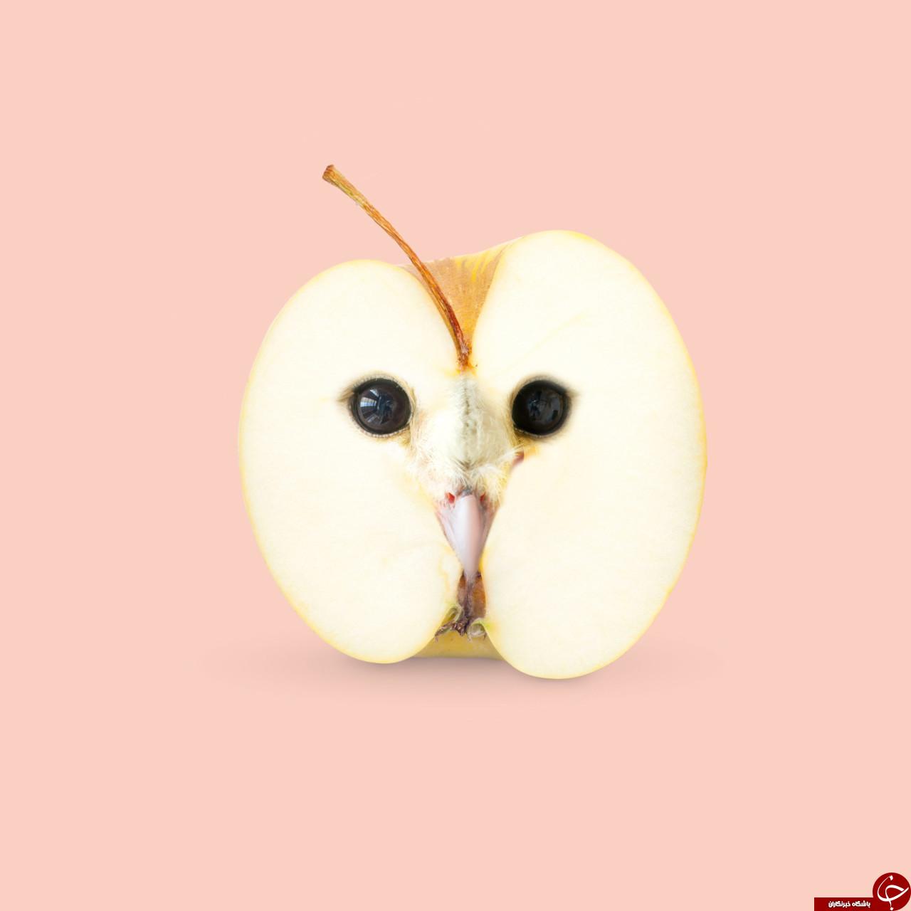 خلاقیت شکفت انگیز یک گروه هنری در ساخت کلاژ با استفاده از میوهها و حیوانات