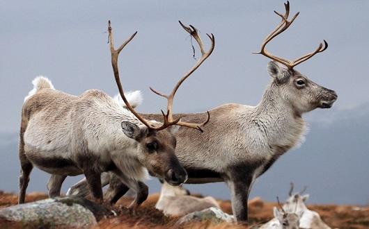 دانستنیهای جالب در مورد حیوانات که شاید باور نکنید+تصاویر