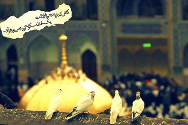 تصاویر و والپیپرهای زیبا به مناسبت شهادت امام رضا(ع)