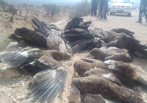شکارچیانی که قربانی شکارچی دیگری شدند