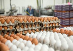 آخرین تحولات بازار تخم مرغ/ مشکل حمل و نقل نهادههای دامی همچنان ادامه دارد