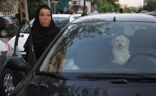 همزیستی بی تعهد با مهمانان بی توقع! / از علتهای علاقه به نگهداری حیوان خانگی تا نقش سلبریتیها در ترویج سگ بازی
