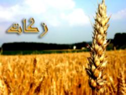 رشد 60درصدی جمع آوری زکات در استان زنجان