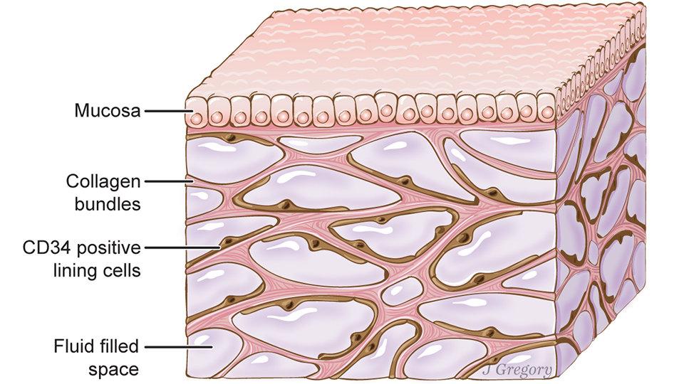 ارگانی به وسعت ۶ زمین تنیس در بدن شما/بزرگترین اندام را بشناسید!