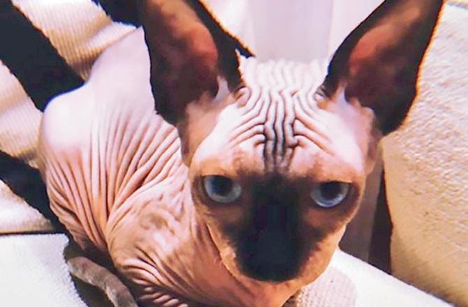 زشت ترین گربه جهان در خانه سوپر استار فوتبال+ تصویر