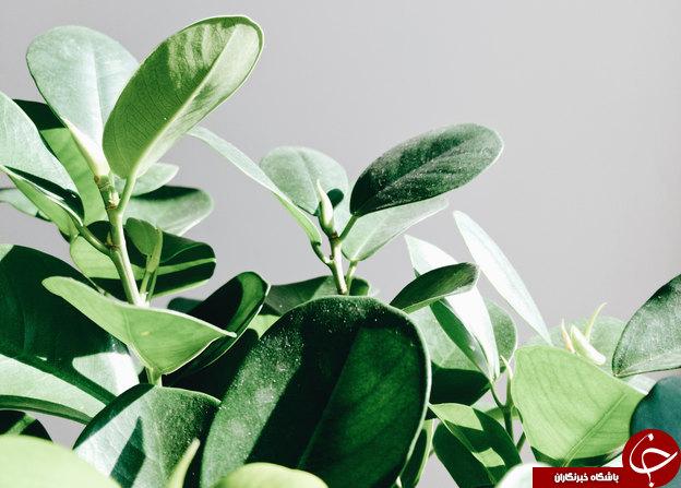 15مورد از بهترین گل ها برای آپارتمان + اسامی و تصاویر