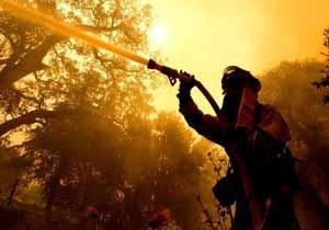 معرفی مقصر وقوع آتشسوزیهای گسترده در جنگلهای کالیفرنیا از زبان ترامپ!