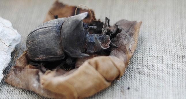 کشف دهها گربه، تمساح و سوسک مومیاییشده در مصر