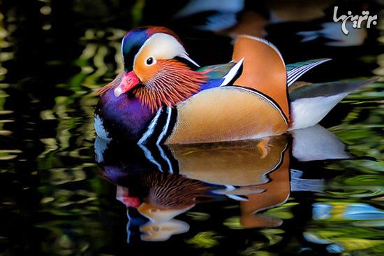 عجیب ترین پرندگان دنیا که شبیه فضاییها هستند