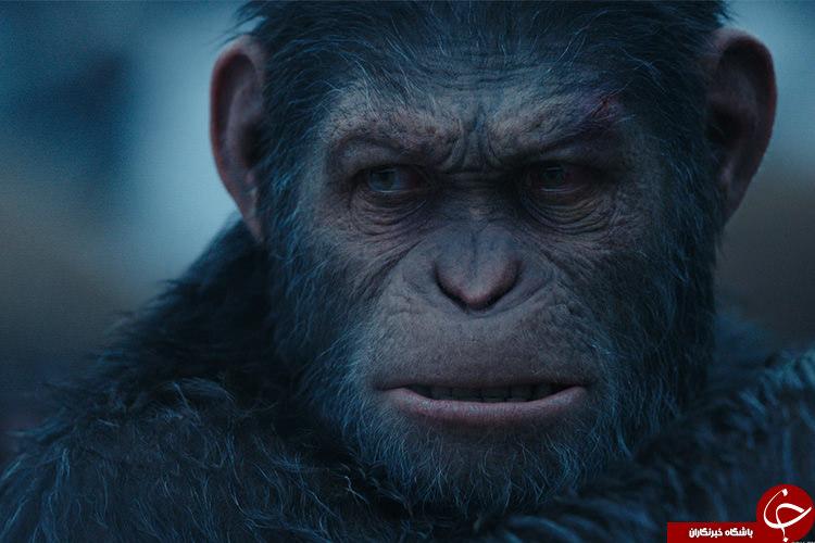 حقایقی شگفت انگیز از میمونها و انسان ها! / آیا انسان از نسل میمون هاست؟  بررسی تفاوتهای مهم بین انسان و میمون