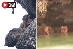 رویت حیوان عجیب انسان نما در دهانه غار! +فیلم