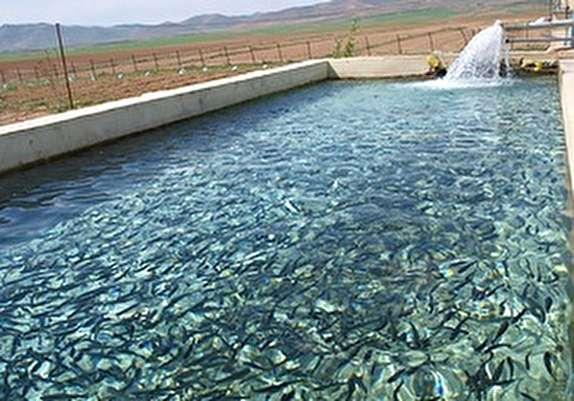 باشگاه خبرنگاران - تولید سالانه ۴۵ میلیون قطعه بچه ماهی در شهرستان سلسله
