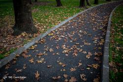 به رنگِ پاییز