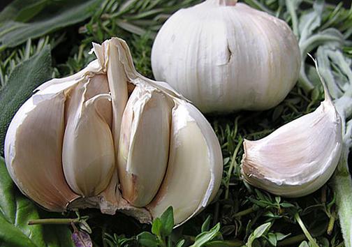 سیر رقیب محصولات صیفی در فارس