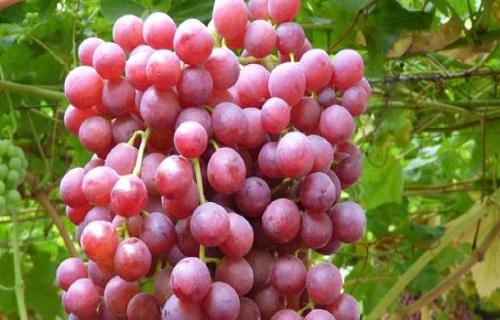 با مصرف این سبزیحات به کاهش وزن دست یابید/برای داشتن پوست زیبا چه بخوریم؟/یبوستتان را با این گل ریشه کن کنید/آیا در زمان بارداری مصرف انار مفید است؟