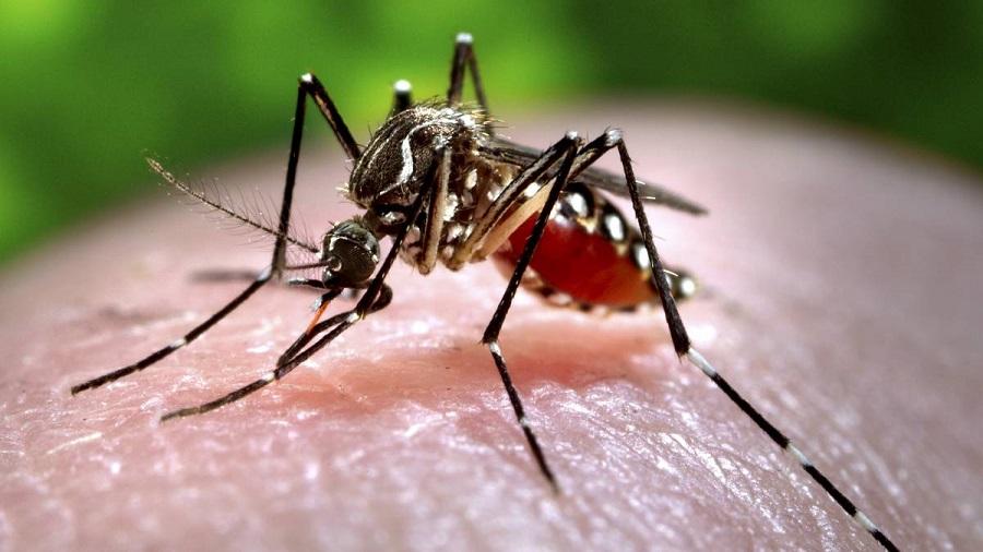 همهچیز درباره «قاتلان نامرئی»/با مرگبارترین بیماریهای عفونی آشنا شوید
