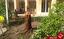 باشگاه خبرنگاران - حال ناخوش درختان در دانشگاه چمران اهواز/ واقعیت ماجرا چیست؟