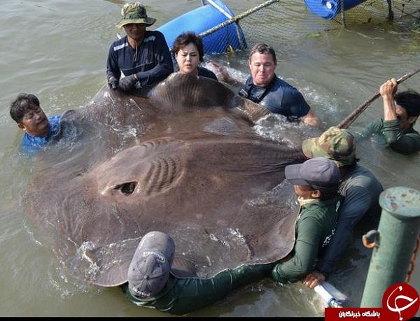 تصاویری از بزرگترین حیوانات جهان