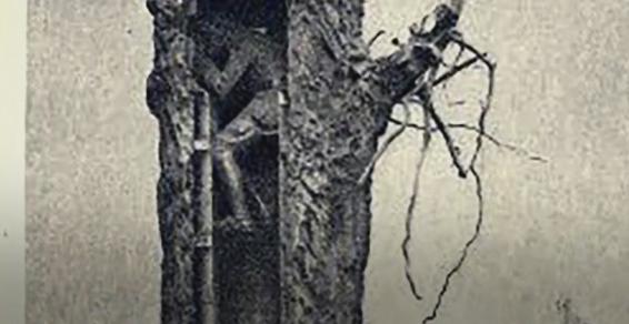 درختان چگونه در جنگ جهانی اول برای اهداف نظامی به کار گرفته شدند؟ +تصاویر