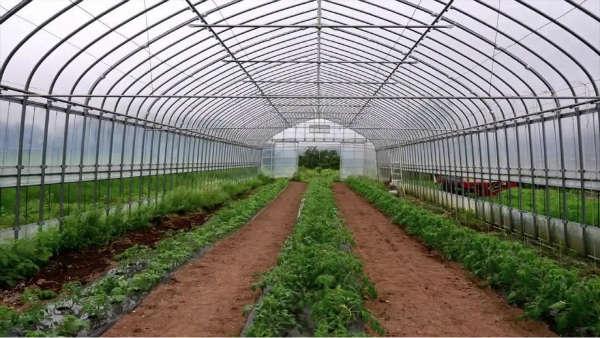 ۱۰ درصد گلخانههای کشور مدرن هستند