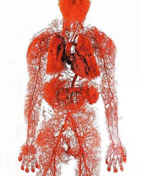 عجایب سیستم گردش خون بدن که جانتان به آن بسته است+ فیلم/ حقایقی از سیستم گردش خون بدن که جانتان به آن بسته است+ فیلم