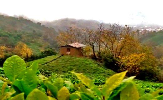 طبیعت بینظیر و جذاب در روستای جیرگوابر + فیلم