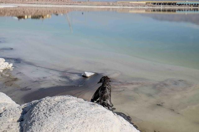 سه شنبه ///احیای دریاچه ارومیه ممکن است سالها به طول بینجامد