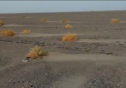 کشف یک جاده سنگ فرش از زیر خاک در جنوب شرقی ایران + فیلم