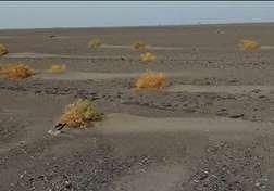 باشگاه خبرنگاران - کشف یک جاده سنگ فرش از زیر خاک در جنوب شرقی ایران + فیلم