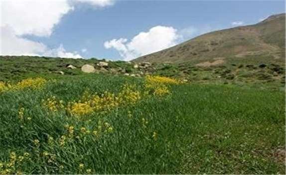 باشگاه خبرنگاران - خسارت ۲۵۷ میلیارد ریالی خشکسالی به مراتع خراسان شمالی