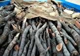 باشگاه خبرنگاران -کشف ۶ تن چوب قاچاق در رامسر