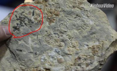 کشف قدیمیترین گل جهان با ۱۷۴ میلیون سال قدمت