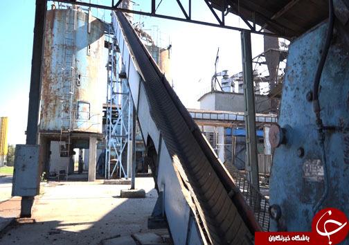 نجات کارخانههای صنایع چوبی مازندران با اجرای درست طرح تنفس جنگل +فیلم