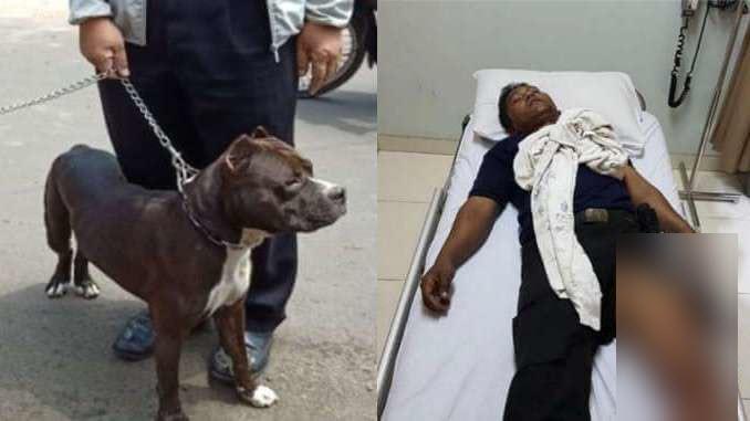 حمله مرگبار سگ پیتبول به نگهبان امنیتی +فیلم