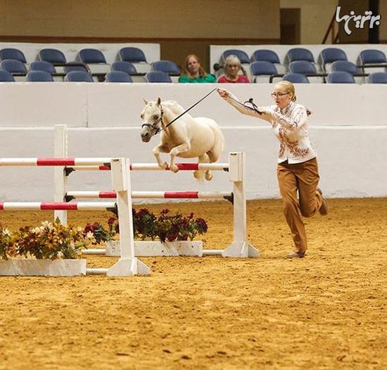 تماشایی ترین اسب های دنیا + تصاویر