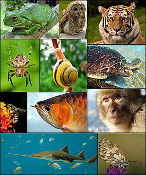 تست جالب روانشناسی که شخصیتتان را از روی علاقه به حیوانات محک میزند!+ تصاویر