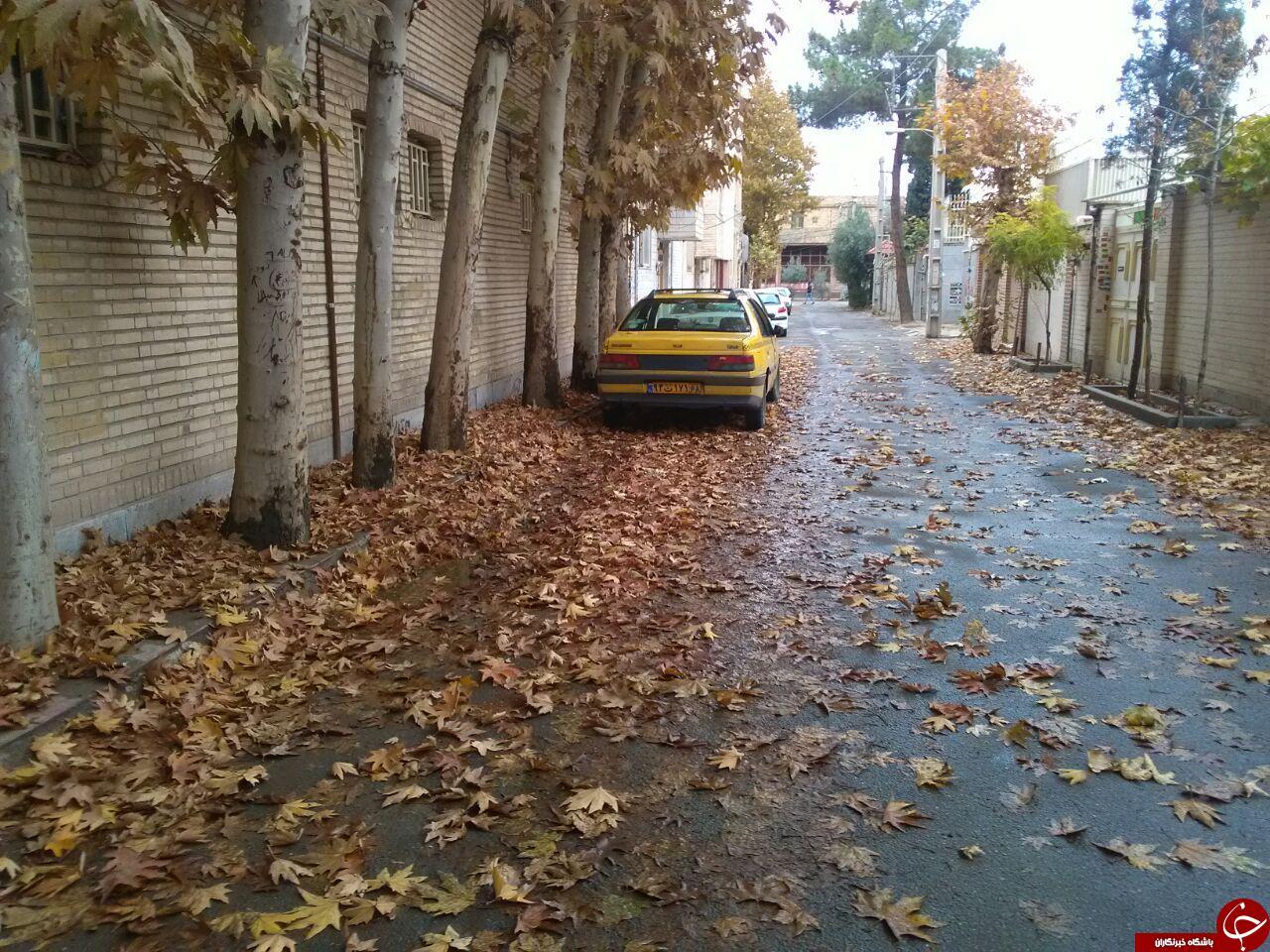 نمایی از طبیعت پاییزی در ورامین + تصاویر