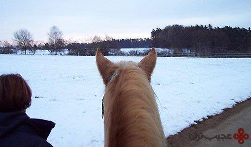 10 واقعیت جالب در باره اسب ها که نمی دانستید!+ تصاویر