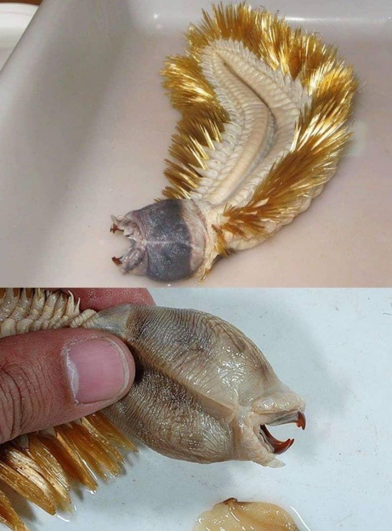 عجیبترین موجودات روی زمین که شاید تا به حال ندیده اید! + تصاویر