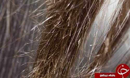 حفظ سلامتی مو و از بین بردن موخورهها با ماسکی از جنس زباله!