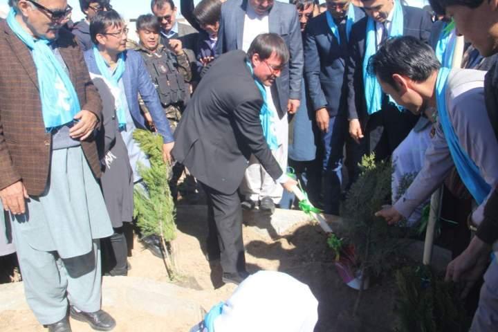 3.5 میلیون نهال در سال جاری در ولایت بامیان غرس می شود