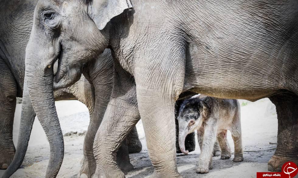 احساس همدردی در فیلها چگونه است؟