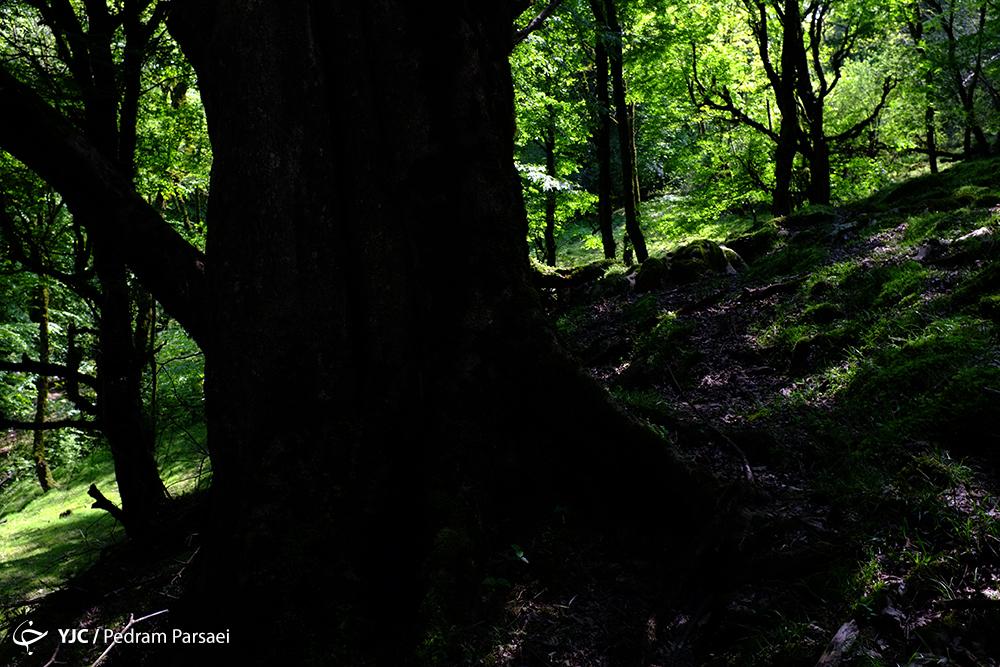 پیوند عجیب ماه شعبان با درخت طوبی / درختی که با دستان خدا کاشته شده است