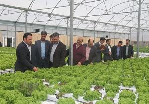 رتبه دوم استان یزد در کشت های گلخانه ای