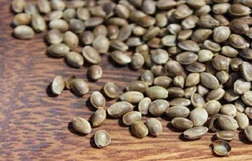 (دانستنی) دانههایی مقوی برای کاهش وزن/ با رازیانه به جنگ ناباروری بروید/  با کدام ورزش میتوان در مدت زمان ۳۰ دقیقه کالری بیشتری سوزاند