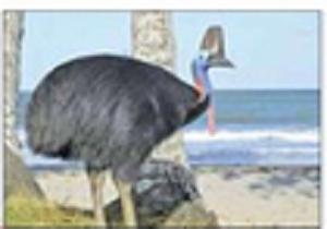 پرنده عصبانی با ضربههای پاهایش صاحب مزرعه را کشت